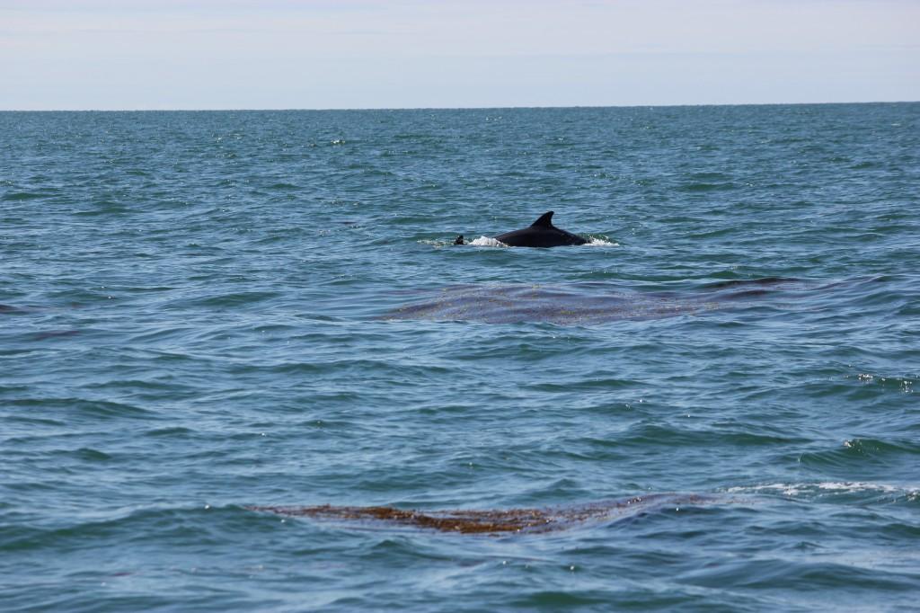 Delfiner!!!